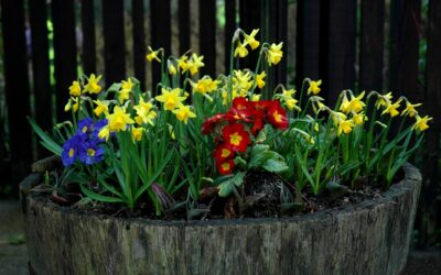 Colne Town Council go into Partnership with Colne in Bloom to keep the Town Blooming!