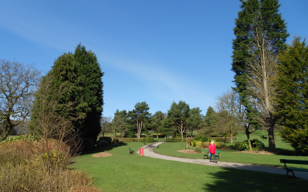 Tree Works within Alkincoates Park