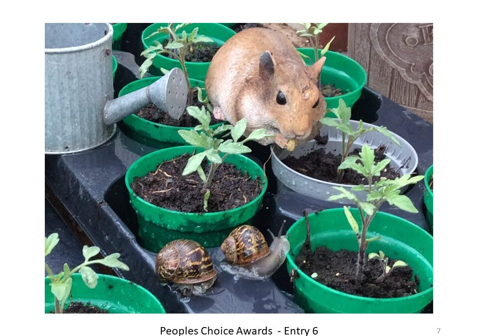 Peoples Choice Award for the best Allotment Photo.